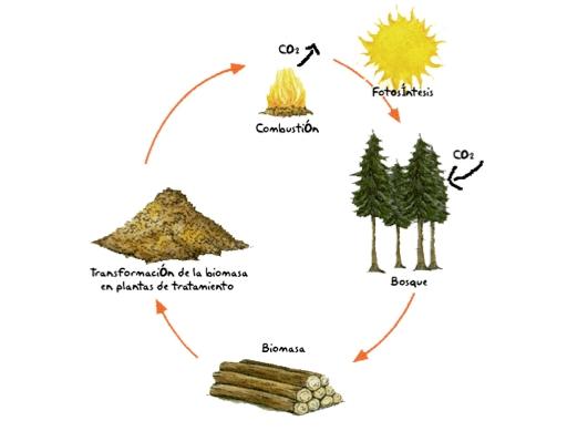 ciclo20biomasa